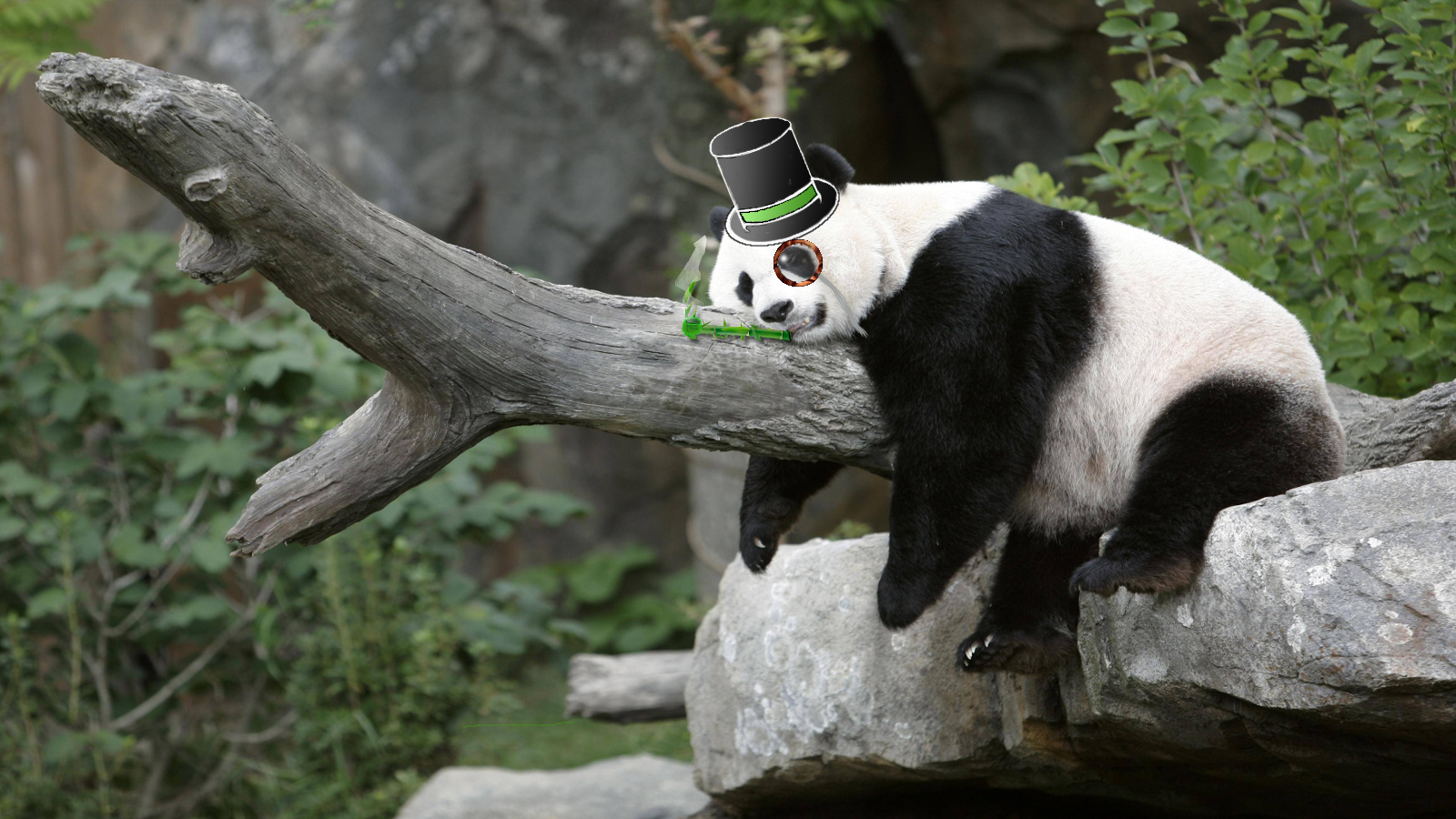 sleepy_gentleman_panda