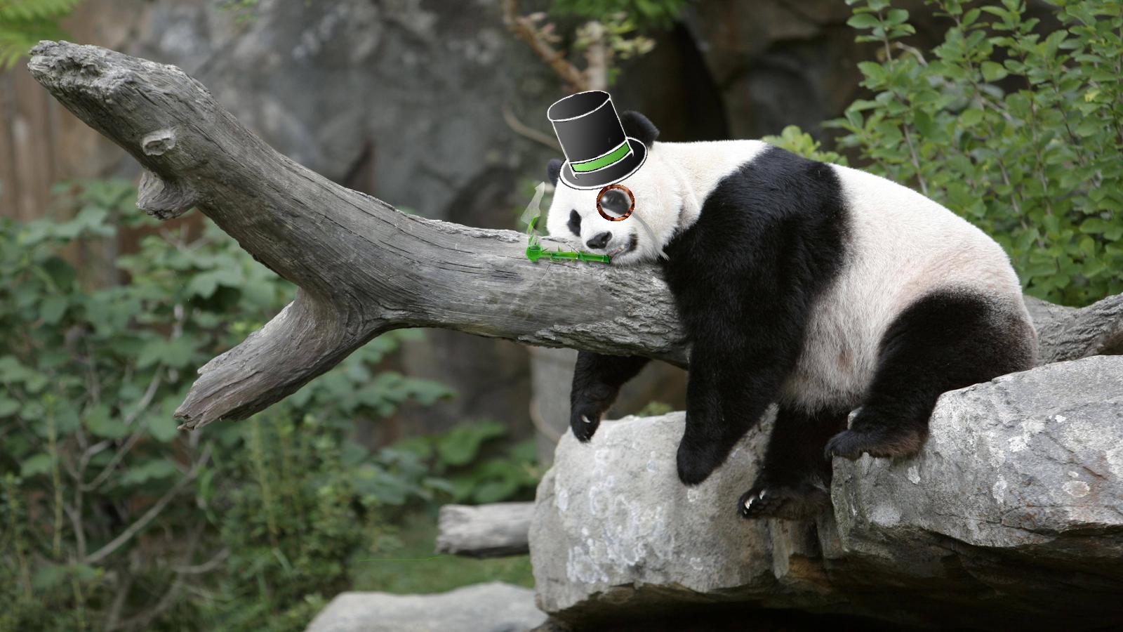 sleepy_gentleman_panda